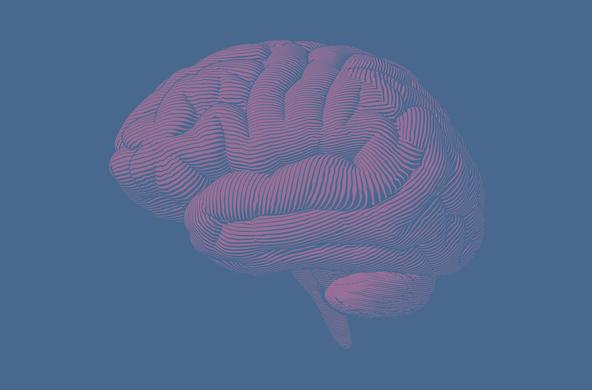 Когнитивные науки и технологии: от нейрона к познанию