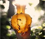 Ваза, сделанная изпчелиных сот
