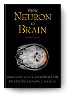 John Nicholls, From Neuron to Brain