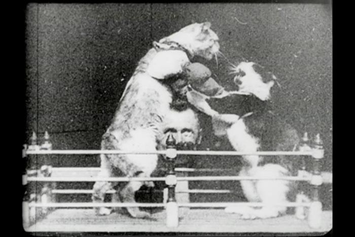 «Боксирующие коты»