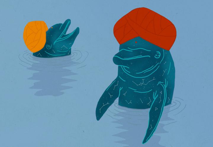 Негуманоидные личности: *как дельфины стали священными животными*