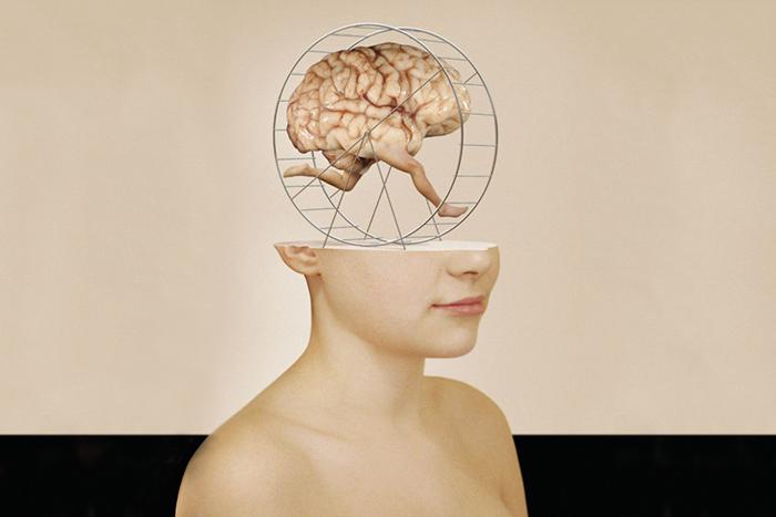 Эволюция головы: *зачем человеку такой большой мозг*