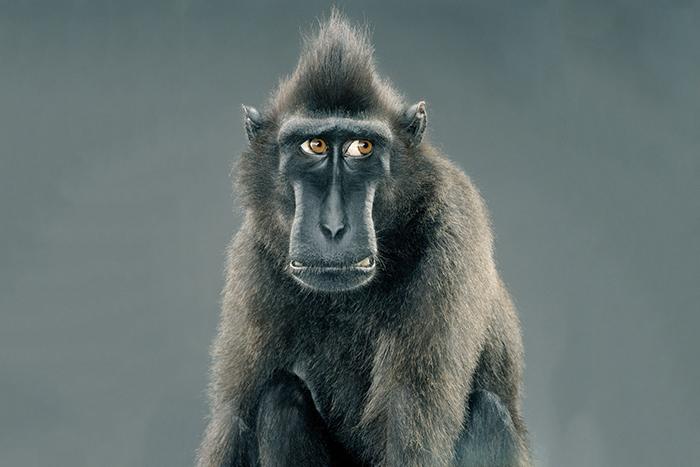 Мемы высших обезьян: *физик Дэвид Дойч о загадках эволюции творческого мышления*