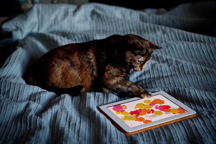 Поймать мышку: *почему животные так любят тачскрины*