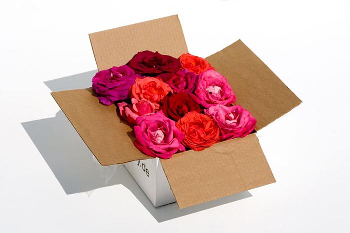 Ученые открыли утраченный фермент, *отвечающий за запах роз*