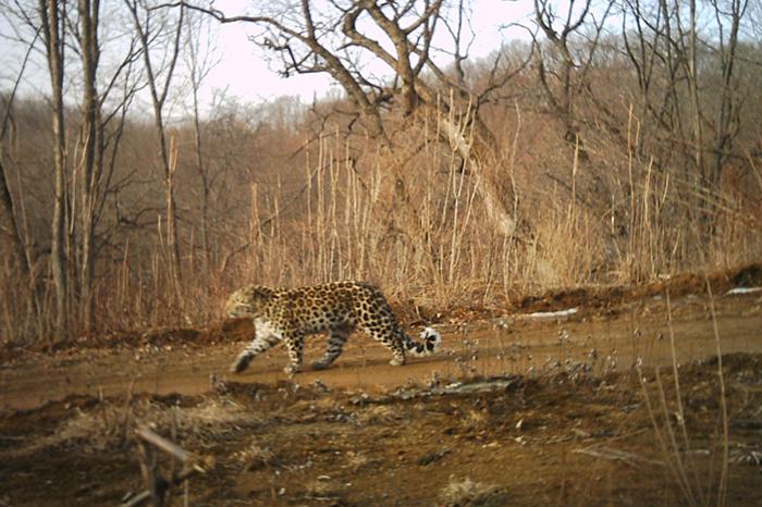 © Hunchun National Nature Reserve of China