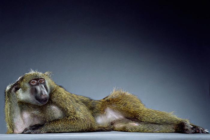 Вечный спор: *эволюционный биолог о моногамии и полигамии у мужчин и женщин*
