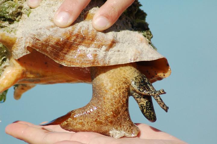 Одноногие пришельцы: *отрывок из книги «О чем поют ракушки» о раковинах и моллюсках*