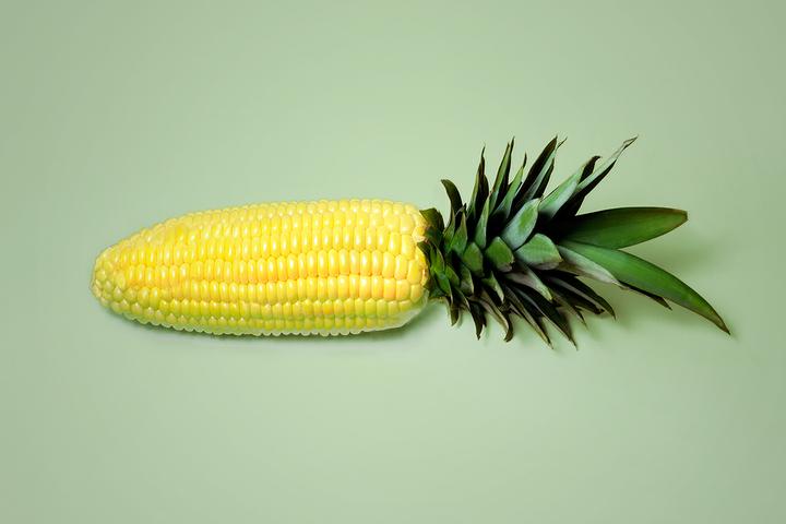 Выйти из леса: что почитать, если вы до сих пор боитесь ГМО