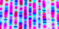 Генетическая дактилоскопия © Gio_tto/iStock