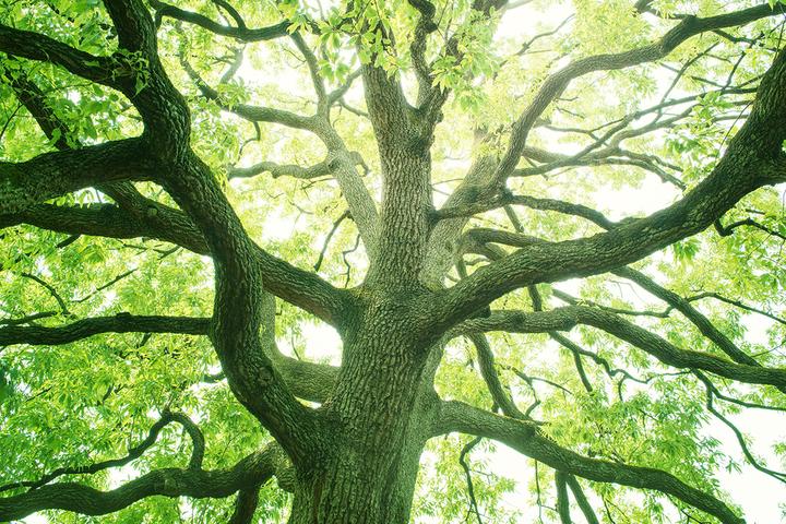 Практическая философия деревьев: на каком языке они общаются и чем похожи на людей