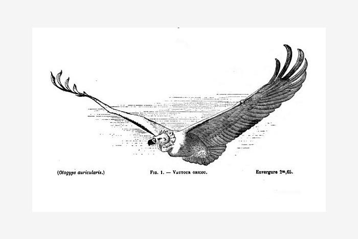 Рисунок изкниги «Воздушное царство»