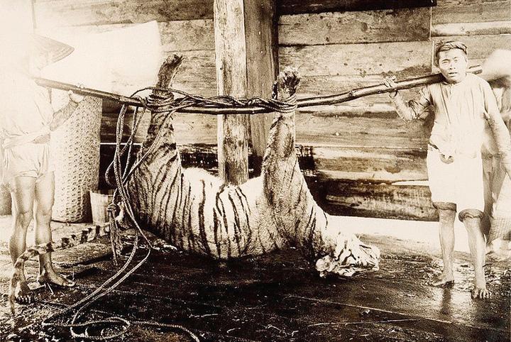 Vietnam Archive 12.1925–1930годы. Фото: Р...