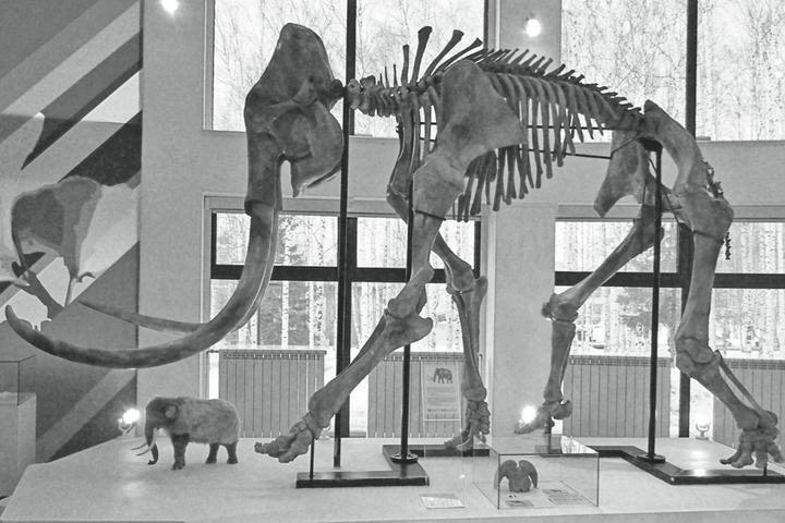 Тронготериевый слон вмузее природы и&nbs...