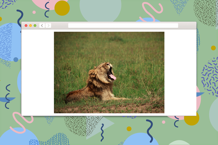 Проверка T&P: угадайте животное по звуку, которое оно издает