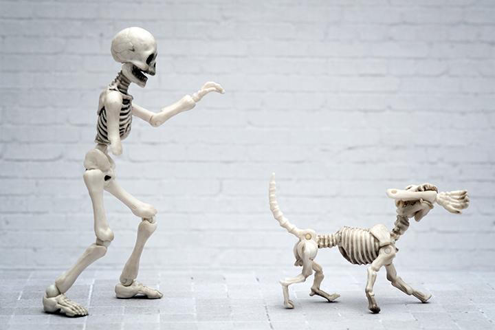 «Людям удобно считать, что животные существуют в жесткой иерархии»: интервью с философом Венсиан Депре