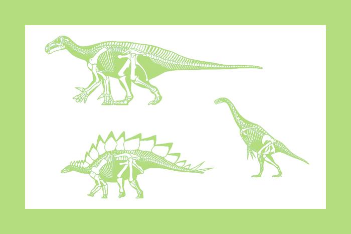 Динозавровый ренессанс: палеонтолог об эволюции, которая превратила тираннозавра в мем