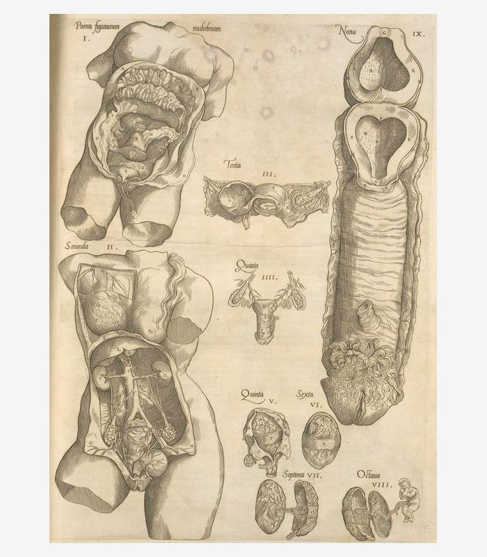 Схема женской репродуктивной системы. 1545&nbsp...