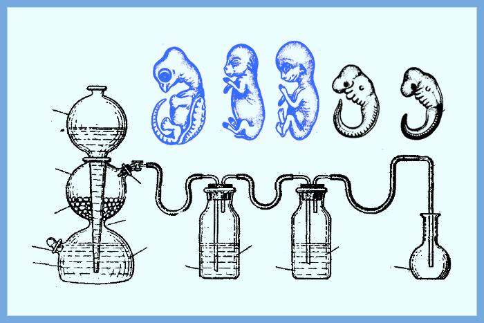 Кембридж в Старом Петергофе: как в СССР развивали эмбриологию и связи с западными учеными