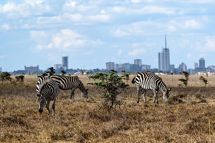 «Всегда уступай дорогу матату»: правила жизни в столице Кении