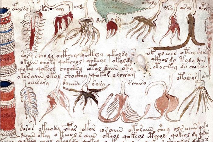 Фрагмент «Рукописи Войнича». Автор неизвестен. ...