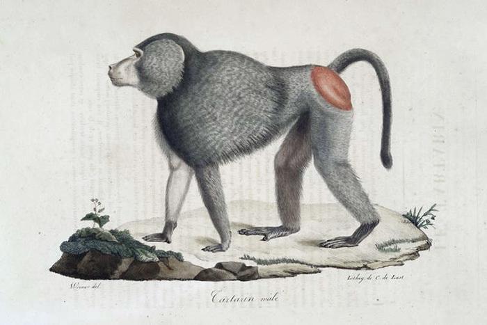 Кладбище горилл и ученые-мизантропы: почему ради спасения людей приходится убивать животных