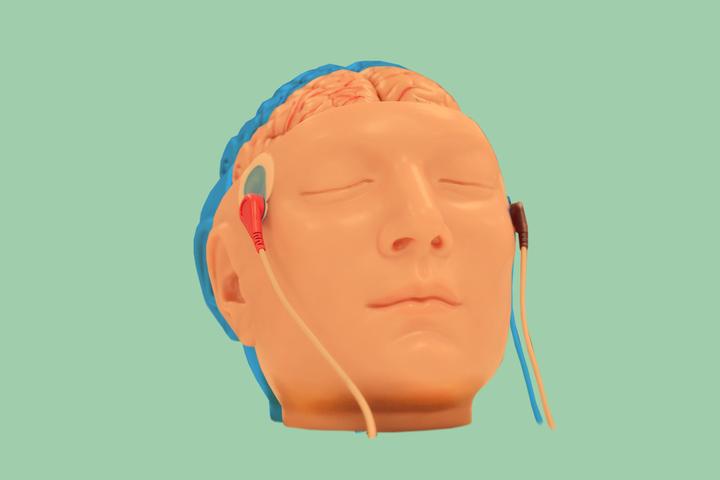 От улитки до профессора Гарварда: что происходит с мозгом, когда мы учимся