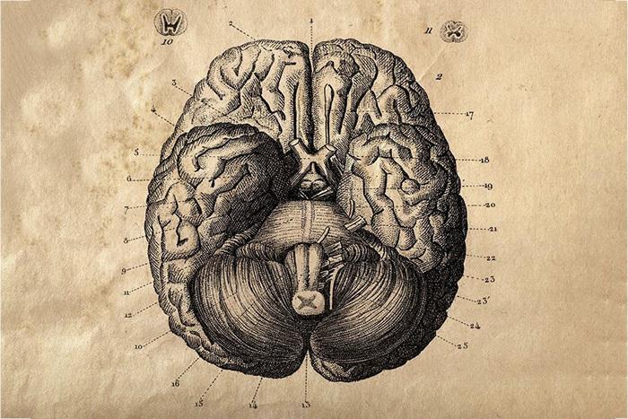 Видео на T&P: как ученые создавали карту мозга?
