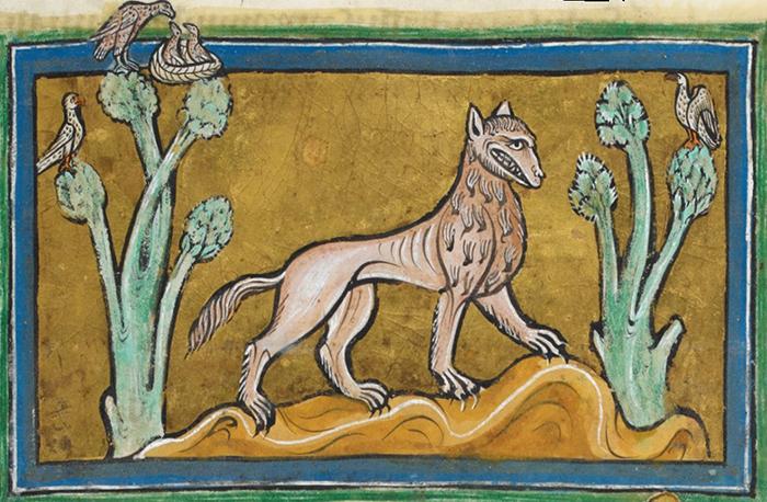 Волк. Рочестерский бестиарий. XIII век