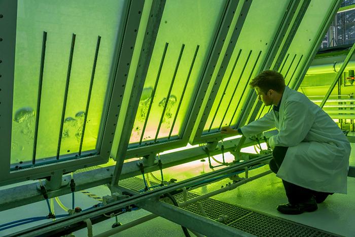 Самолеты на водорослях и пакеты из свеклы: зачем нам нужно биотопливо