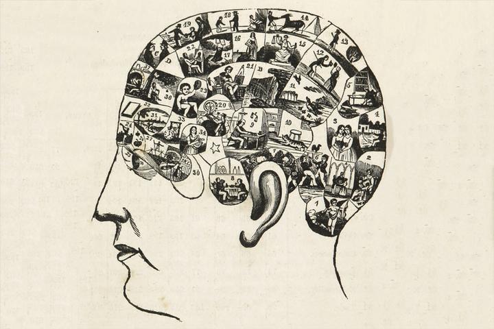 Хочу всё знать: как рождается любопытство и какие области мозга за это отвечают