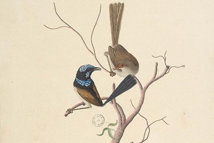 Рейнджеры, дозорные и коучи: как птицы создают социальные сети и ведут себя в них