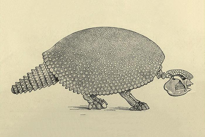 Таинственные ископаемые: как ученые смирились с мыслью, что иногда животные вымирают