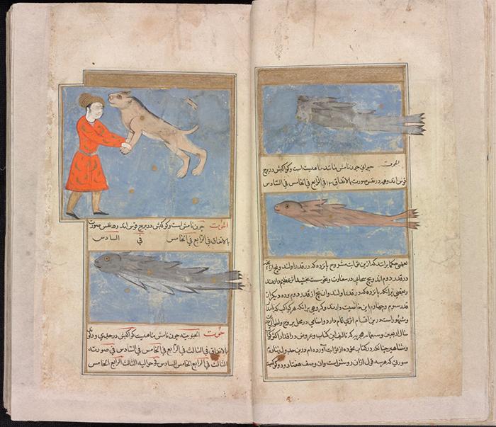 Рукопись книги «Чудеса творения» Закарии аль-Ка...