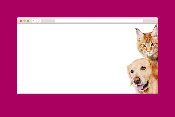 Кошки или собаки: какой питомец спасет от одиночества