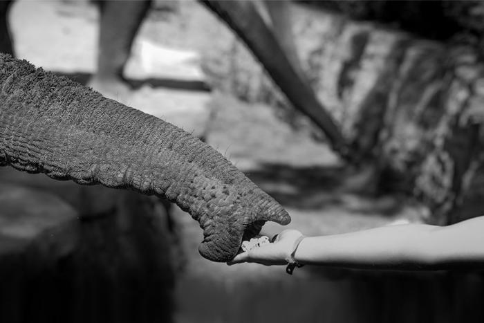 Общаемся с ламами и ухаживаем за слонами: как провести отпуск в формате волонтерства