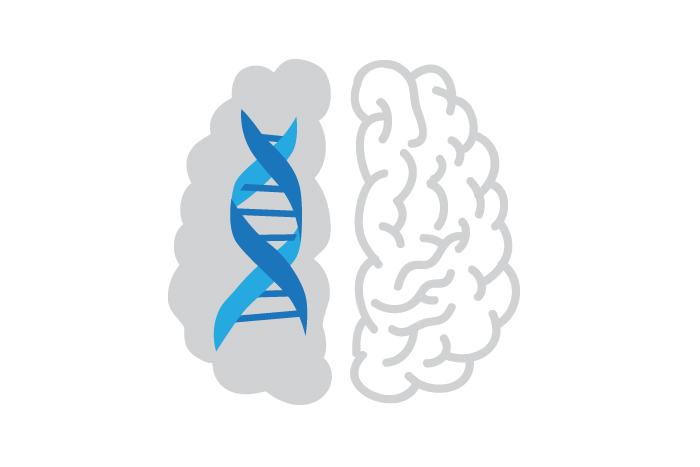 Иммунные клетки мозга тормозят работу нейронов