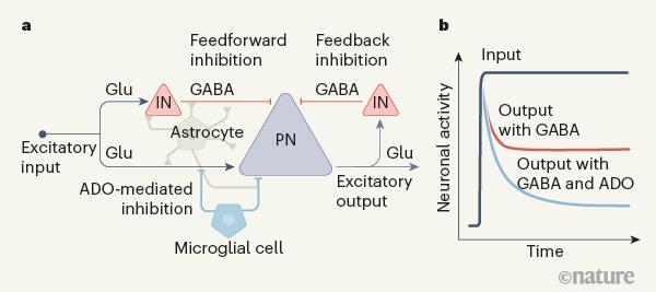 Рисунок 1.— Подавление активных нейронов ...