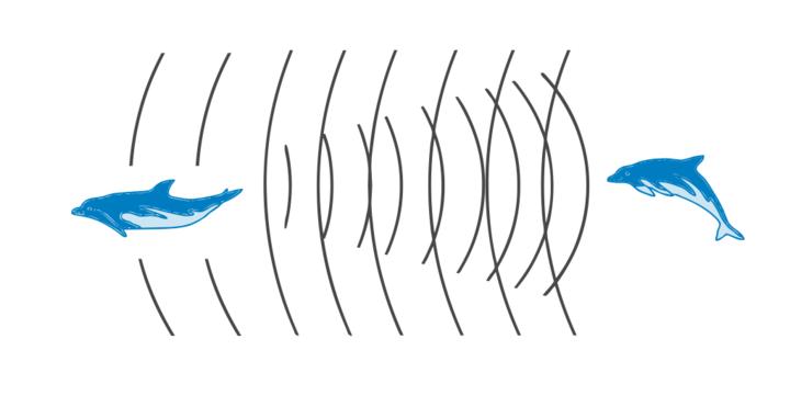 Общение междудельфинами