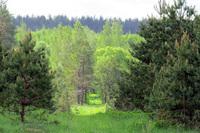Ферма «Маленький лес»