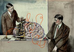 *Самые популярные видео про мозг:* сон, память и влияние генов на интеллект
