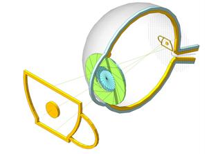Как работает человеческий глаз и *зачем мозгу фотошоп*