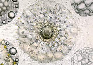 5 уроков с TED-ed: *тайная жизнь планктона, история франчайзинга и вирусное видео*