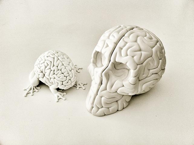 Когда-то люди вкладывали усилия в развитие памяти»: Джошуа Фоер о том, как ничего не забыть