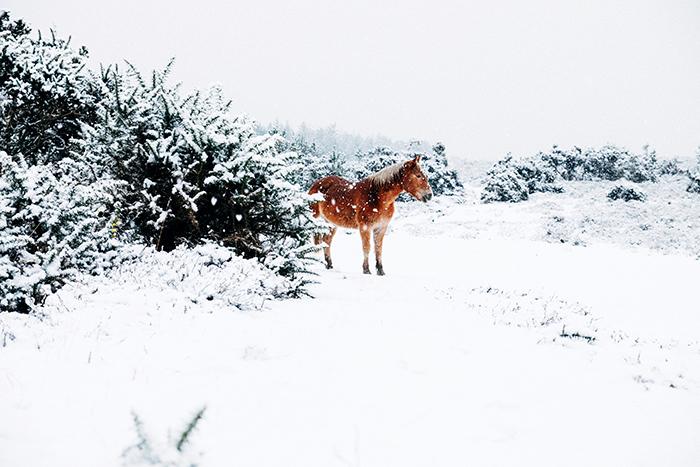 Зимние интенсивы: 9 возможностей чему-то научиться на каникулах