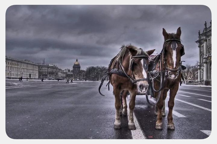 Кому вредит катание на лошади?