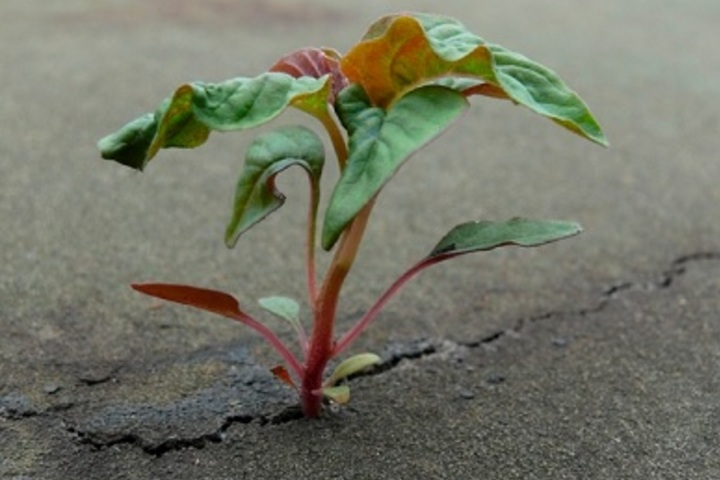 Английский разговорный клуб: Grow where you are planted