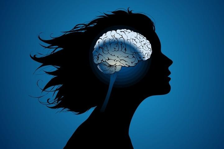 Как мозг управляет поведением: от врожденного поведения до когнитивного контроля