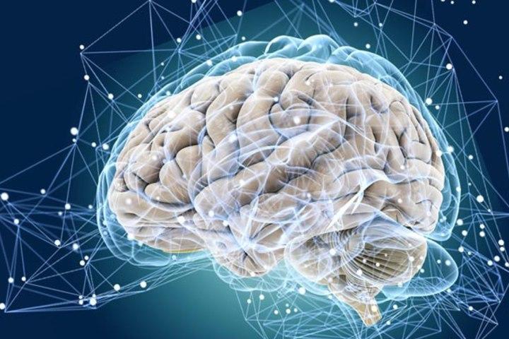 Мозг и гомеостаз