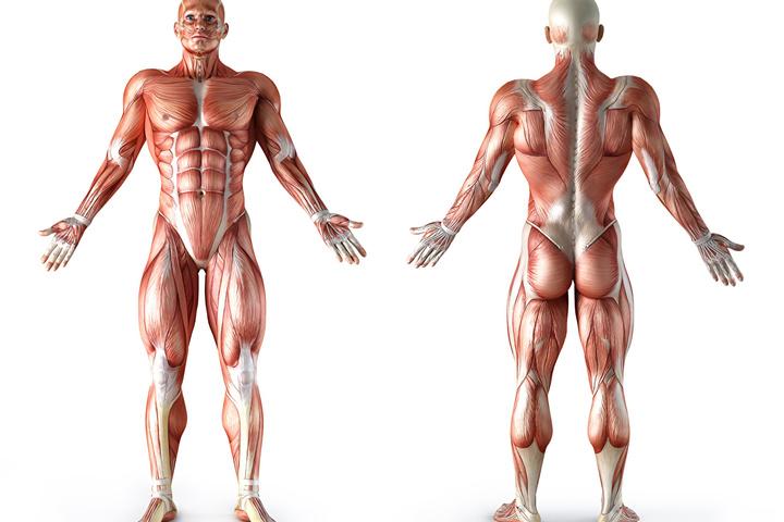 Тело - зеркало души